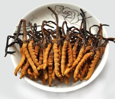 cao uống cường dương đông trùng hạ thảo loại tốt của việt nam